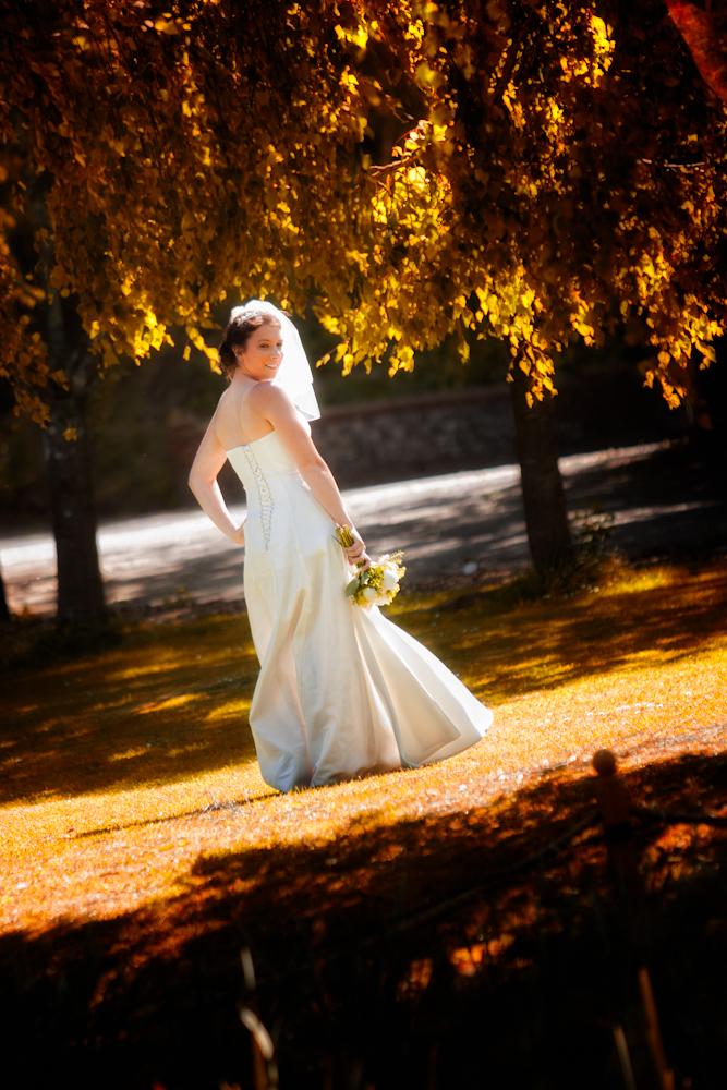 Willow tree at Crockstead farm Hotel